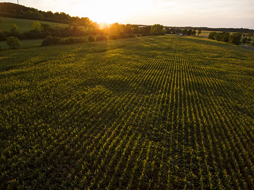 summer drone drones dji djiphantom4 phantom4 farm farming corn sunset harvest peace peaceful