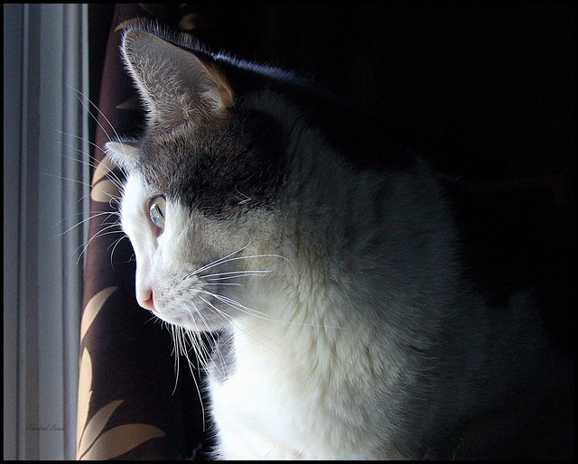 Ernie Tubbs~Rest in peace sweet baby