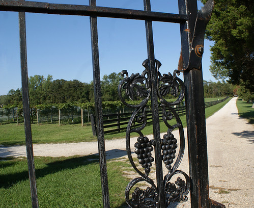 Summerseat Farm gate and grapevines, Mechanicsville