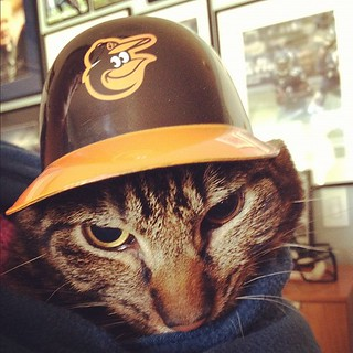 Simba doesn't look happy to be an #orioles #fan #mlb #cat … | Flickr