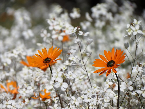 Namaqualand #1 | by FRAMES OF MIND ~ Chris Preen