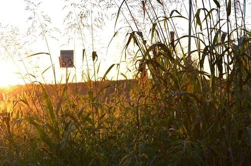 cornfield nikon highway farm northcarolina chapelhill mapleviewfarm d5100