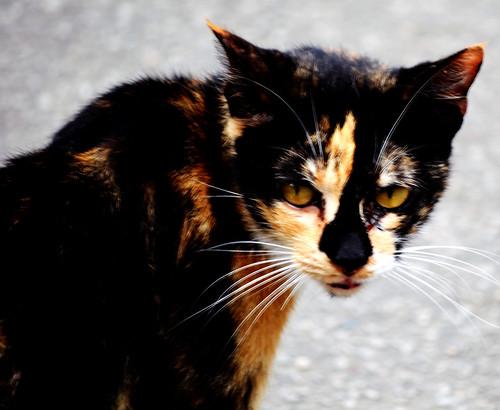 Gato | by Rodrigo Soldon Souza