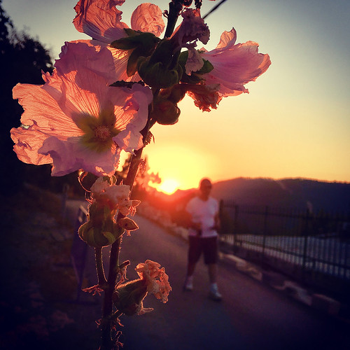miro42 sunset jerusalem einkarem flower pink sky israel mirona