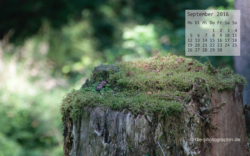 baumstumpf_september_kalender_die-photographin