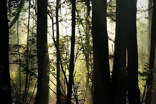 mist fog thewoods