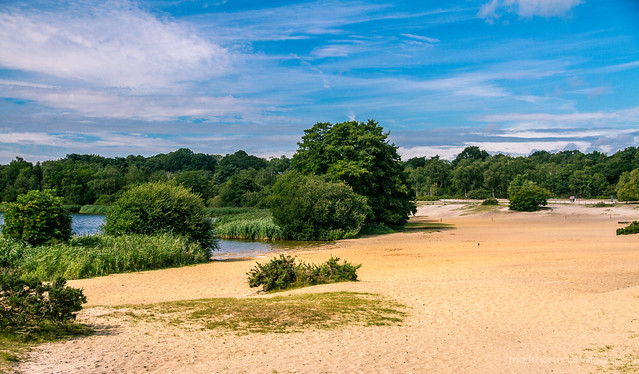 Beach at Frensham Great Pond