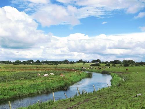ireland sky green galway water grass clouds creek weide europe cows meadow wiese bach brook kühe pastureland
