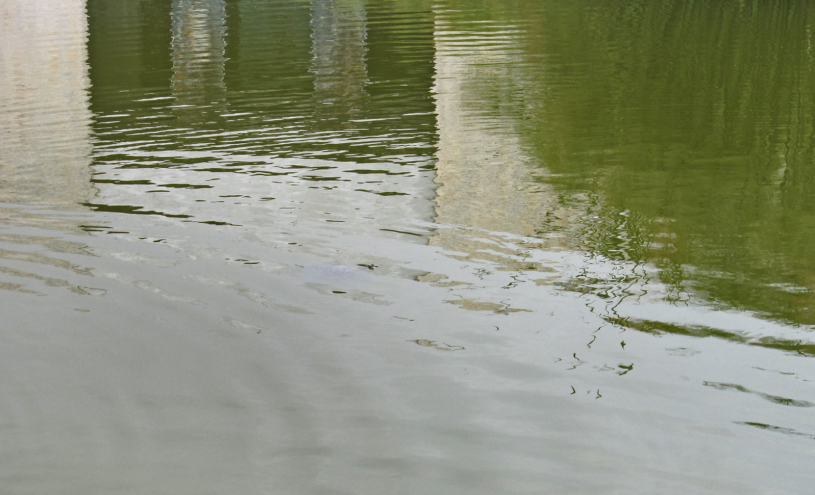estanque 01