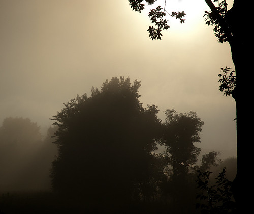 morning trees brown mist leaves sunrise