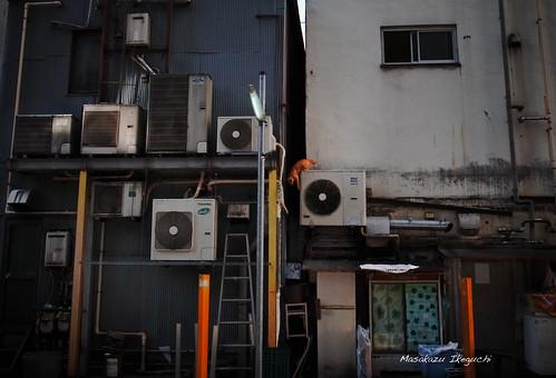 Untitled (7854300394) by Masakazu Ikeguchi