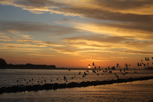 sky nature birds sunrise dawn australia urunga