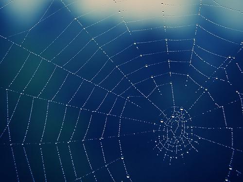 Spiderweb | by 55Laney69