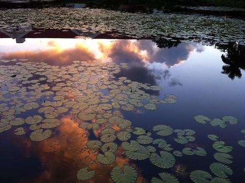 reflection sunrise pond lilypads timeless iphone 2012366 dailyphoto12