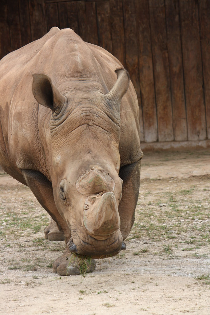 R Rhino Usage Warning rhino | if you ...