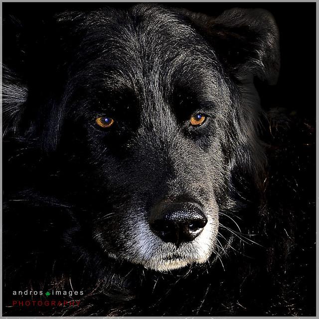 ARGOS, EL PERRO FIEL // Argos, the faithful dog. Narración de Homero en la Odisea //Narration in the Odyssey of Homer