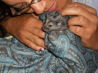 Russian Dwarf Hamster Playing with Family | by Lyn Lomasi