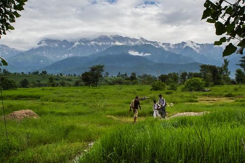 farmer punjab mehmasarja goritaindiaricevillageriskuncertaintyfoodsecurityclimatechangecgiarclimatecgiarccafseducationadaptationpovertysmallholderfarmeramknagricultureresearch himachalpradeshindiareportingpalampur