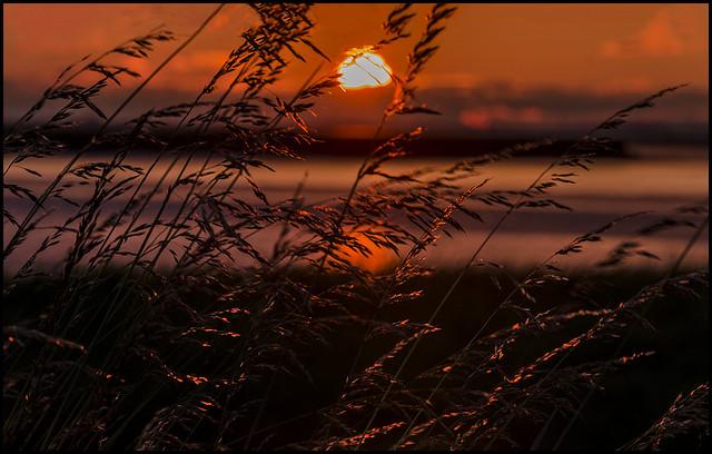 Sunset Through The Grasses