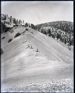 Mt. Baldy trip for Pomona College students (1903) - Three students straddle the Hogsback Ridge