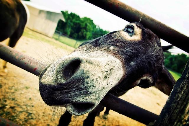 Mel the Donkey...