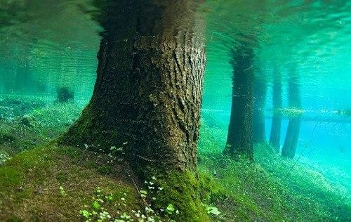 Underwater Forest, Gruner See, Austria