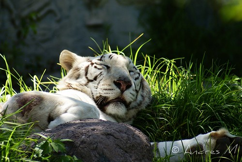 Descansando