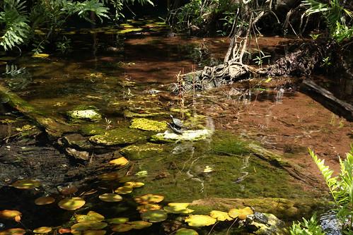 gran cenote turtles