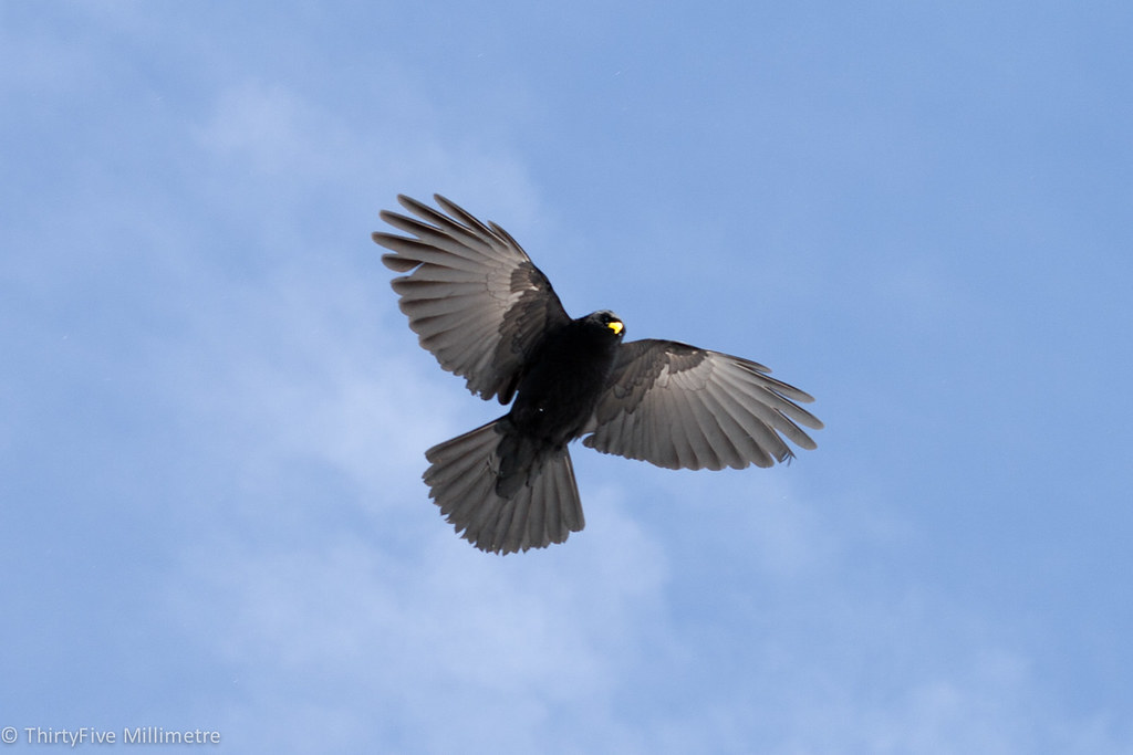 Bird In French Alps Bird Of Prey Hovering And Ready To Sw Paul Murray Flickr