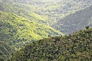 Mauritius Valley