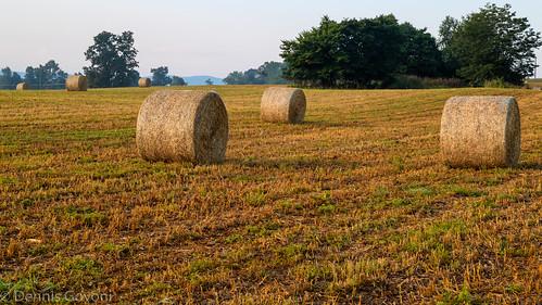 virginia virginiaarboretum arboretum bales blandyfarm field landscape summer sunrise boyce unitedstates us