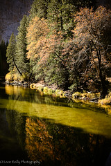 The Merced River in Autumn (Fall), Yosemite National Park.