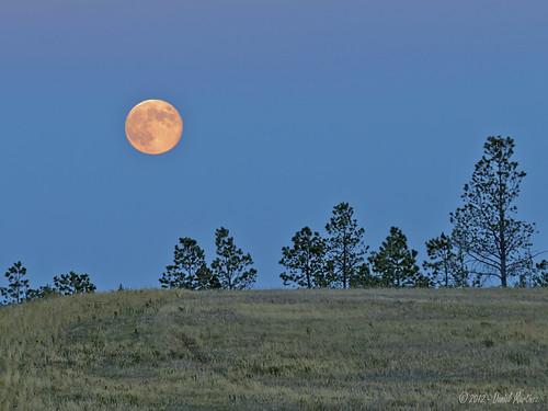 blue summer moon tree grass night colorado dusk harvest august coloradosprings bluemoon d60