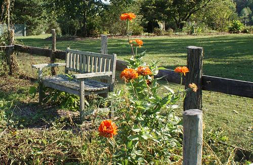 Summerseat Farm, early fall garden
