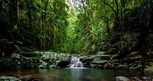 park trees nature water waterfall rainforest rocks nightcap lismore