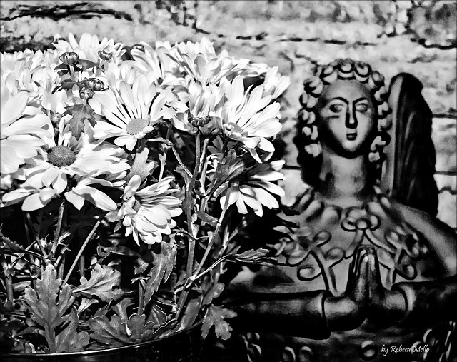 Pray for us ...or ... The angel and the daisies ...