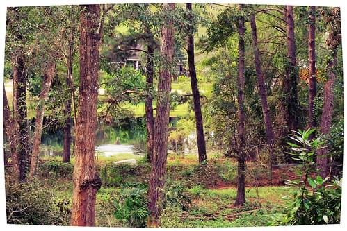 lake pond woods florida ripple swamp fishingpond