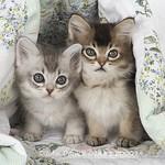 _PJ82836 copy (2) thomas kittens
