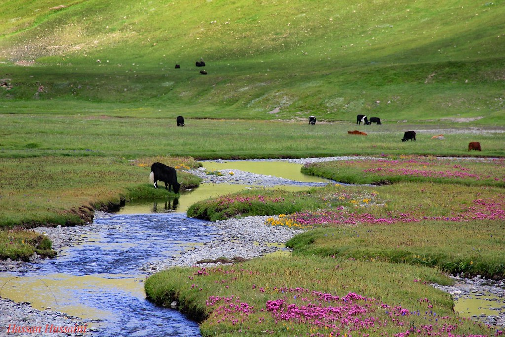 Image result for deosai national park