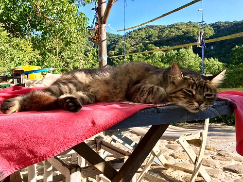 Don Gato descansando | by Finca la Casilla