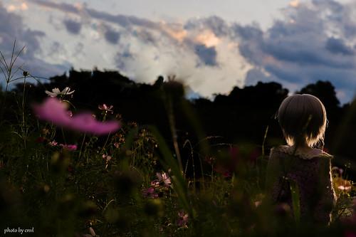 autumn nature landscape sony snap 秋 dd dollfie volks tamron a09 彼岸花 曼珠沙華 朝 曇り 秩父 2875mm 巾着田 a900 dollfiedream janese cnvl ソニー α900 ボークス 野外撮影 無風 サイタマ゚∀゚