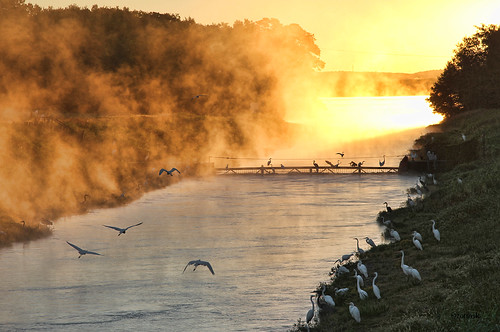 arkansas ano arkansasrivervalley arkansasnuclearone water lakedardanelle bird fishing mist dawn sunrise egrets herons channel nuclearpower powerplant