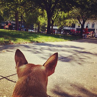 The squirrel tracking system is fully operational #HRD #Milo | by tedeytan