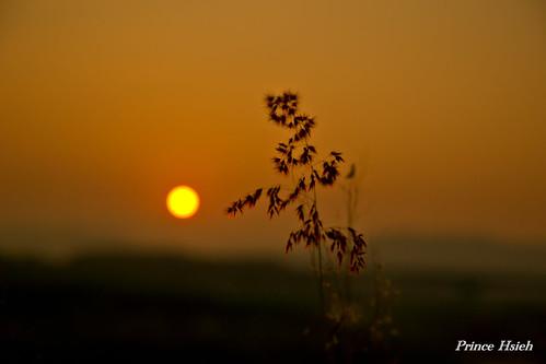 sunrise taiwan 南投 taichung 日出 nanto 芒草 台中市 晨彩 貓羅溪 sonya850 sony2470za mauluoriver