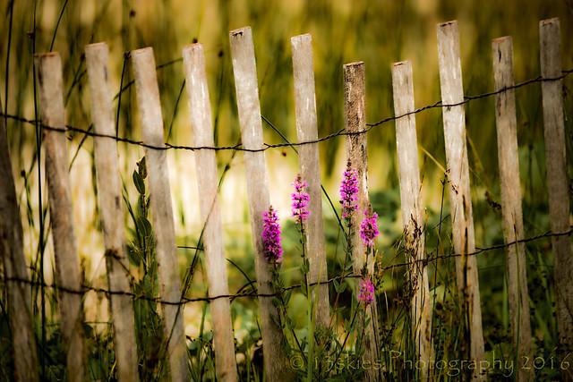 Beach Fence (HFF)