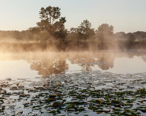 mist fog sunrise illinois pond dew preserves lakecounty foggyscenes halfdayforestpreserve lcfpd halfdaypond