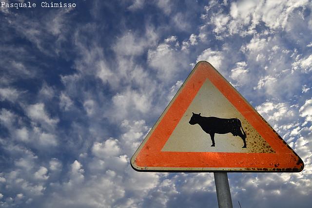 Sheeps & Cows