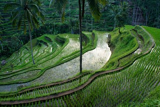 Rice terraces modeling | by Meetin' the world