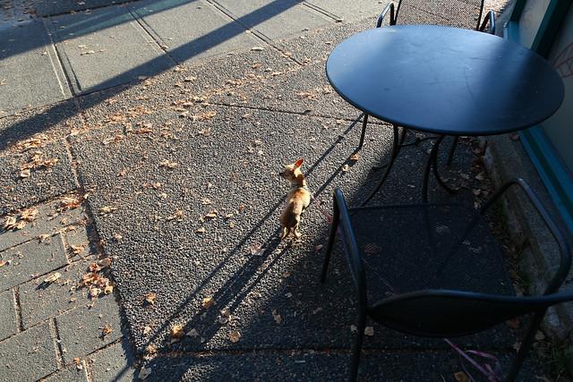 cafe guardian