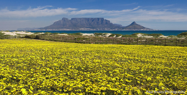 Table Mountain Spring Flowers